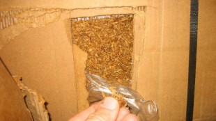 Sample of the loose tobacco.